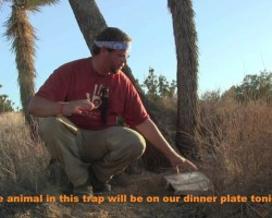 Active Trapping The Paiute Deadfall Trap in Action