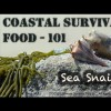 Cool Survival Food 101 – Learn to Harvest, Eat and Like Slimy Sea Snails – AKA – Knobbed Whelks