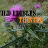 Wild Edible Plants Thistle, Wilderness Survival