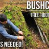 Bushcraft Shelters – Tree Root Shelter with no tools | TA Outdoors