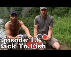 Catch n Cook CLAMS | The Wilderness Living Challenge 2016 S01E13 – BACK TO FISH