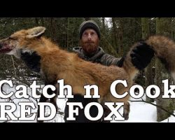 Catch and Cook WILD RED FOX!!!   PRIMITIVE BOW DRILL FIRE   EATING FOX MEAT