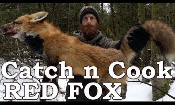 Catch and Cook WILD RED FOX!!! | PRIMITIVE BOW DRILL FIRE | EATING FOX MEAT