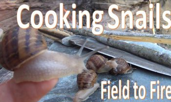 Catch N Cook Snails -Survival Escargot-