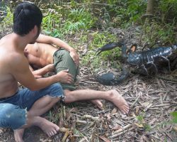 Head Wilderness | Hunt big and extremely Poisonous scorpion in jungle and grill immediately.