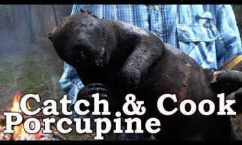 Porcupine Catch n Cook Clean | Learn The Primitive Hangi | Corn Meal Bread With Mortar & Pestle