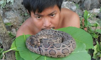Primitive Cooking Snake Awesome Grilled Big Snake Eating Delicious Wild Camping In The Forest