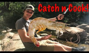 Primitive DIY Prawn Trap – Catch n Cook!