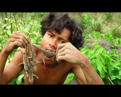 Primitive Technology – Find Butterfly Agama lizard – grilled lizard eating very yummy