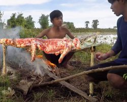 Primitive Technology fish trap – catch crocodile in the rice field field – catch and cook 2018