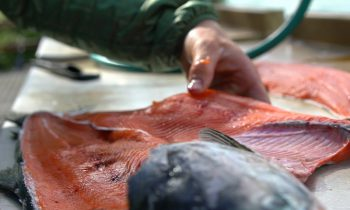 Alaskan Catch and Cook – BEST TASTING FISH