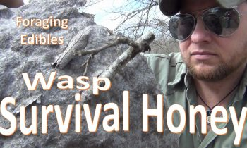 Survival Honey -Foraging Honey Wasp